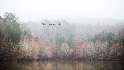 Flying geese over foggy lake