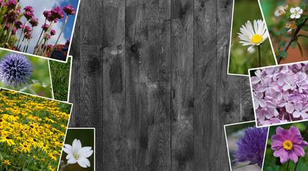 Frühlings Collage - Bilder von blühenden Blumen im Garten.
