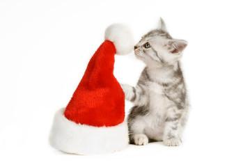Grau getigertes Kätzchen schnuppert an Weihnachtsmütze isoliert auf weißem Hintergrund