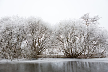 White frozen trees in the Amsterdamse Bos.