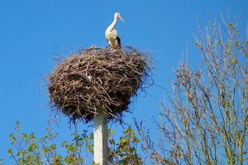 stork nest under a blue sky
