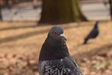 Pigeons in the park with a brown background