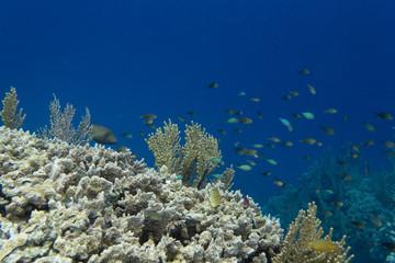 Impressive biodiversity in the reef