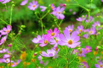 公園の草花の風景14