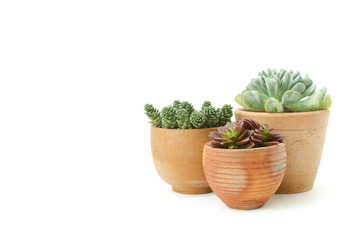Various types of mini succulent house plants clay pots on white background