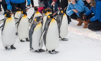 King Penguin walking parade show on snow with people around  watching with fun  at Asahiyama Zoo, Asahikawa, Hokkaido, Japan