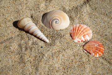 colorful sea shells and snail on sand in the beach