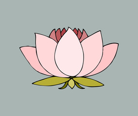 sketch hand-drawn isolated national symbol of india water lily lotus