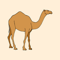 sketch isolated southern animal camel dromedary