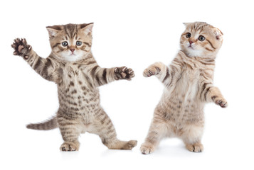 Papier Peint - Funny young cats dancing isolated