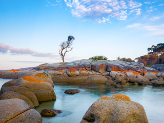 A single tree grows on a granite outcrop in the Bay of Fires, on the east coast of Tasmania, Australia.