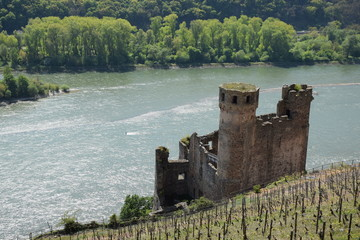 Ruine Ehrenfels am Rhein