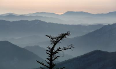 Tree is silhouetted in the morning light in front of the mountains surrounding Yongpyong Alpine Centre