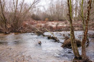 Río Órbigo, árboles alisos y chopos.