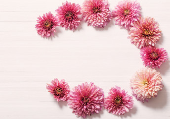 pink chrysanthemums on white wooden background