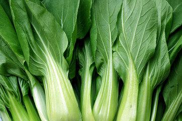 Fresh green vegetable bok choy or chinese cabbage