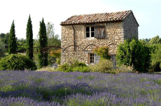 Luberon (Vaucluse), maison de pierre et lavande, provence, France