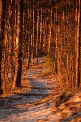 Photo of trees, snow trail in forest