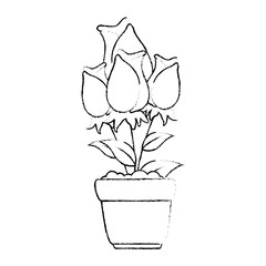 beautiful roses in pot vector illustration design