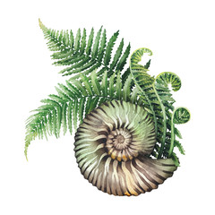 Prehistoric watercolor seashell and fern branches