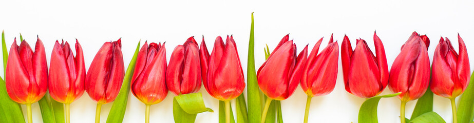 Red tulip flowers on white background. Flat-lay. Negative space.