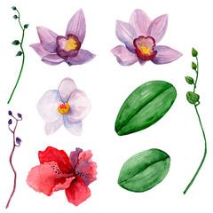 Hawaiian flowers clipart. Watercolor orchids clip art