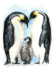 Imperial Penguins Watercolor Illustration