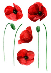 Watercolor poppy clip art. Red flowers clipart