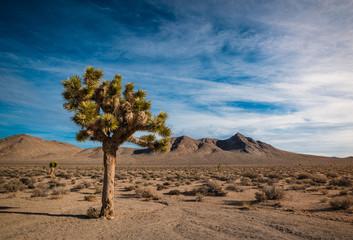 arbre de Jésus dans le désert.