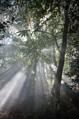 Rays of light beaming through the foliage of a forest.