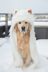 Golden Retriever in winter warm wolf hat in a snowy background