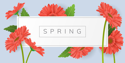Horizontal banner for text with red gerbera daisy flower and green leaf. Vector illustration frame on blue background for spring and summer
