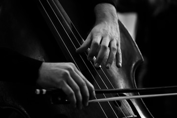 Hands of a musician playing on a double bass closeup in black and white tones