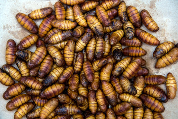 worms silkworms in a basket