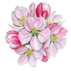 hand-painted watercolor illustration of Apple blossom