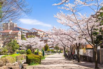桜が咲く住宅街