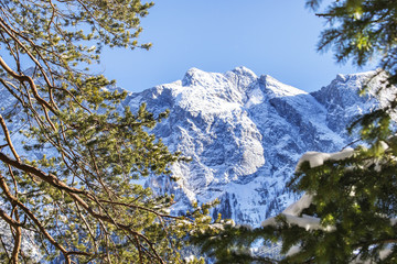 Verschneite Zugspitze Waldlichtung