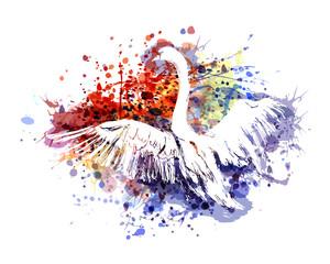 Vector color illustration swan