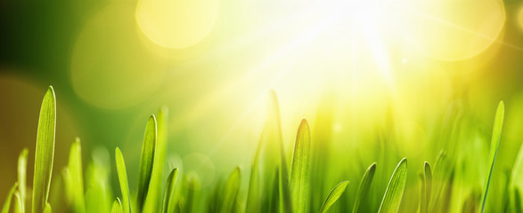 Spring Natural Background With Sun