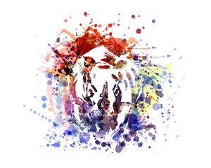 Vector color illustration rhinoceros