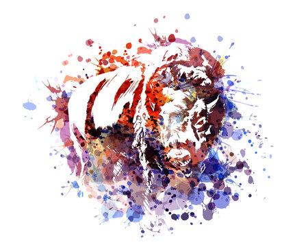 Vector color illustration bison