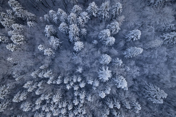 Snowy winter woods in Carpathian Mountains. Aerial shot.