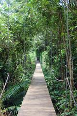 passerelle dans la jungle