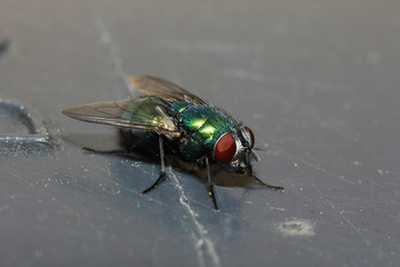 The fly has two subordinates of the two-winged bird while there are numerous families
