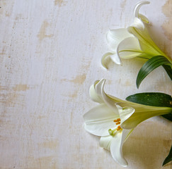 Easter Lily on White rustical Background.Lot of copy space