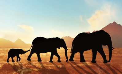 family of elephants at sunset