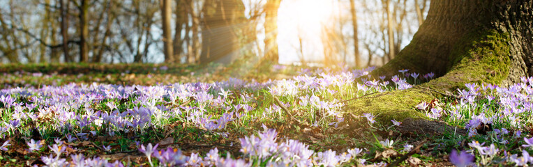 Wiese mit zarten Blumen im Frühling