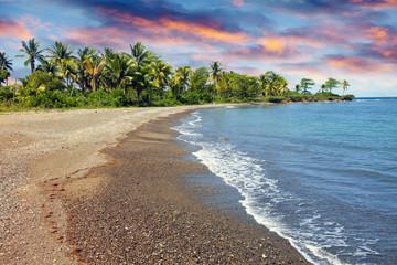 sandy sea coast with palm tree. Jamaica..