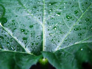 Красота зеленого листа