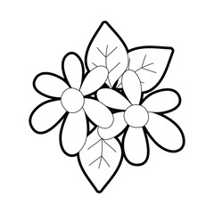 outline beautiful flowers with petals and leaves decoration